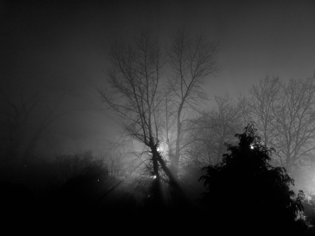 Trees and night lights