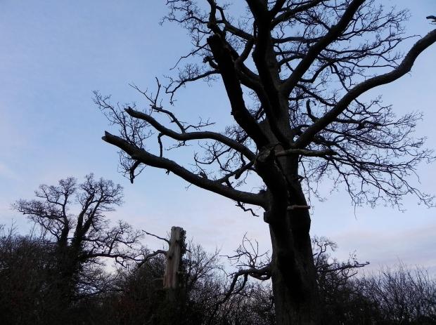 The tree - Farnham park
