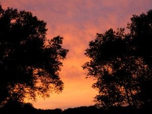 Red sky, black trees