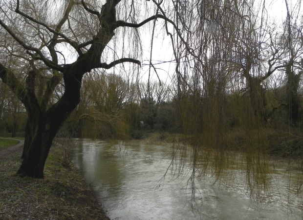 River Wey January 2014