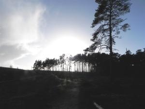 Landscape: south Farnham